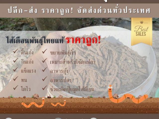ขายไส้เดือนพันธุ์ไทยแท้