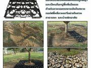PSD Tree rings tree guards tree grates Trench Grating กรอบตะแกรงปกป้องรอบโคนต้นไม้