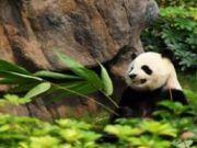 เที่ยวจีน เฉินตู จิ่วจ้ายโกว หวงหลง เล่อซาน ง้อไบ๊ 8 วัน 7 คืน