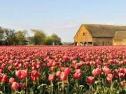 ทัวร์ยุโรป เนเธอร์แลนด์ เยอรมนี ลักเซมเบิร์ก เบลเยี่ยม 7 วัน 5 คืน