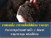 ขายเบดดิ้ง อาหารเลี้ยงไส้เดือน ราคาถูก คลอง5 คลองหลวง ปทุม โดย มือเปื้อนดิน