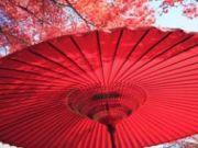 ทัวร์ญี่ปุ่น SPECIAL SPARKLING FLOWER IN TOKYO 5 วัน 3 คืน