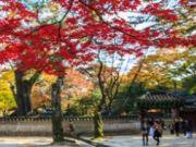 ทัวร์เกาหลี LOVE AUTUMN IN KOREA 5 วัน 3 คืน