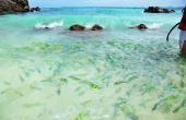 ทัวร์เกาะพีพีวิวพ้อยเกาะไข่ เรือเร็ว
