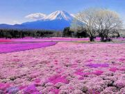 FLOWER FESTIVAL IN HOKKAIDO 5วัน 3คืน ไปกับ ภาณุทัวร์