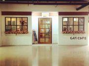 ร้าน cat cafe ขาย เซ้ง ย่านสาทร ถจันทน์37 ในศูนย์การค้า วนิลามูน Vanilla Moon